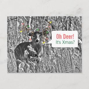 Lustiges Weihnachten - Rotwild mit