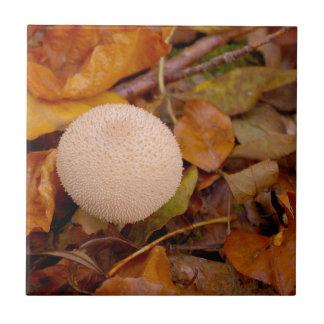 Lykoperdon Puffballpilz Kleine Quadratische Fliese