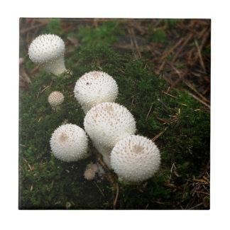 Lykoperdon Puffballpilze Kleine Quadratische Fliese