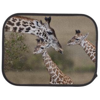 Maasai Giraffe (Giraffe Tippelskirchi) wie gesehen Automatte