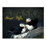 Macareux à cornes, Alaska Cartes Postales
