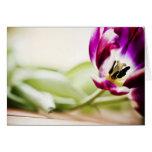 Macro carte de voeux de tulipe vide