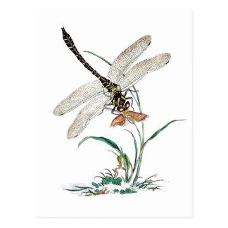 Magie de libellule cartes postales