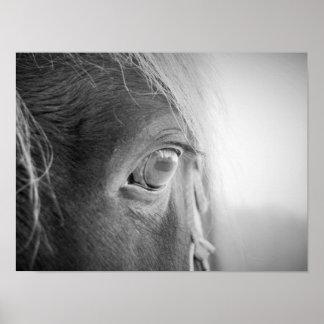Magisches Pferd Schwarzweiss Poster