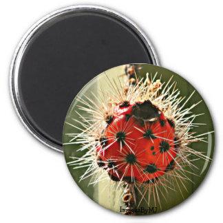 Magnet der Ofen-Rohr-Kaktus-Blüte