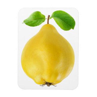 Magnet Flexible Fruit de coing