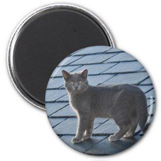 Magnet gris argenté de chaton magnet rond 8 cm