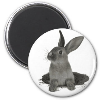 magnet : lapin nain gris magnet rond 8 cm