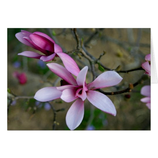 Magnolie blüht Notecard Grußkarte