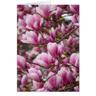 Magnolie, die auf Baum blüht Karte