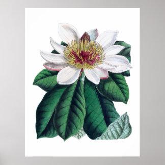Magnolien-weiße große Blume Cusion Poster
