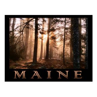 Maine-Waldsonnenaufgang Postkarte