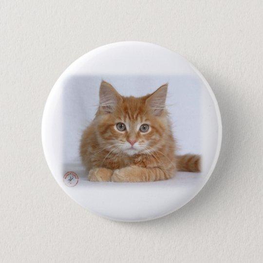 Maine-Waschbär-Kätzchen 9Y226D-373a Runder Button 5,7 Cm