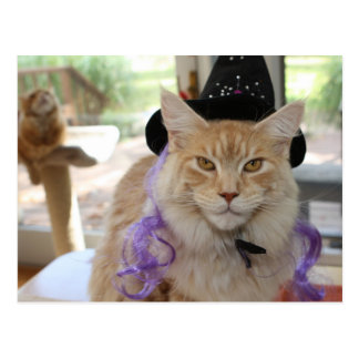 Maine-Waschbär-Katzen-Hexe-Postkarte Postkarte
