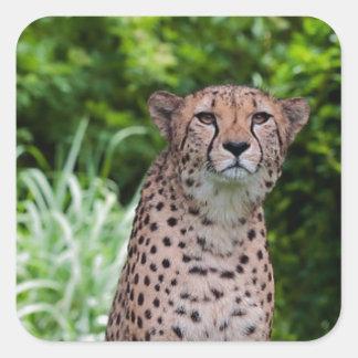 Majestätischer Gepard Quadratischer Aufkleber