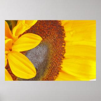Makrosonnenblume Poster