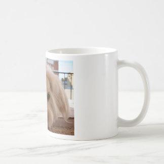 maltesische 3 kaffeetasse