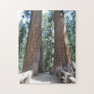 Mammutbaum-Nationalpark