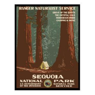 Mammutbaum-Nationalpark Postkarte