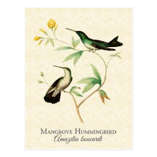 Mangroven-Kolibri-Vintage Kunst Postkarte