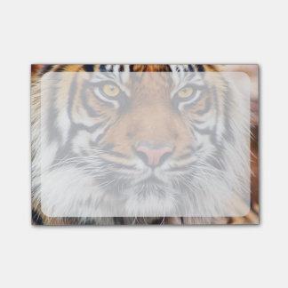 Männliche sibirischer Tiger-Farben-Fotografie Post-it Klebezettel