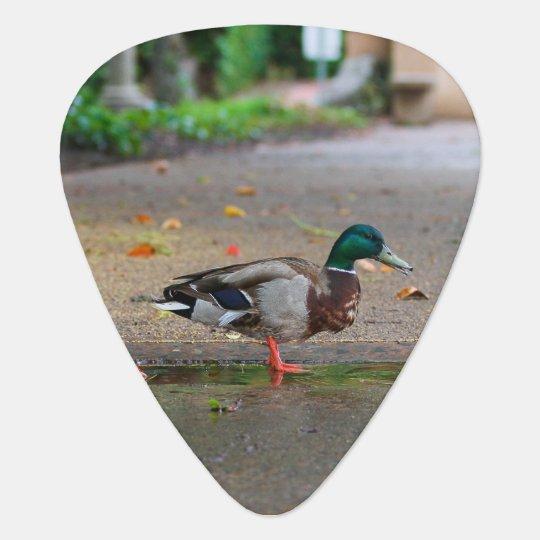 Männliche Stockenten-Ente am regnerischen Tag Plektrum