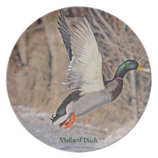 Männliche Stockenten-Ente, die Tier-Vogel-Platte Essteller