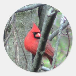 Männlicher Kardinals-Foto-Aufkleber Runder Aufkleber