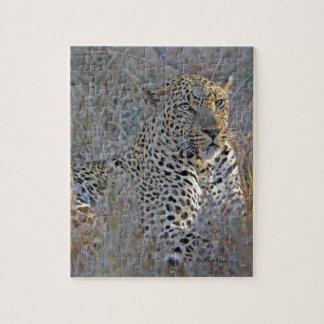 Männlicher Leopard