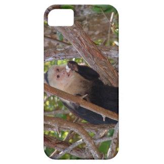 Manuel Antonio Costa Rica Affe iPhone 5 Etuis