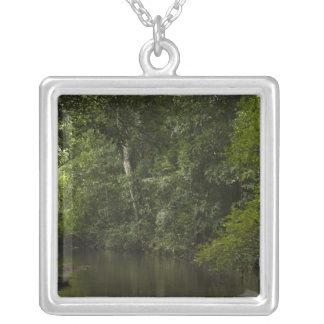 Mapari Fluss, Mapari Rupununi, Guyana Versilberte Kette