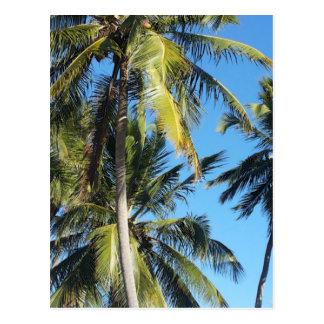 Maragogi Palmen Postkarte