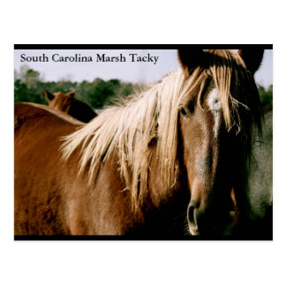 Marais de la Caroline du Sud de mauvais goût Cartes Postales