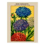 Marguerite française vintage de la Reine de paquet Cartes Postales