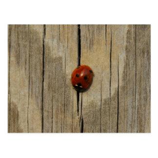Marienkäfer auf Holz Postkarte