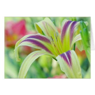 Markierte Lilie - Taglilie Karte