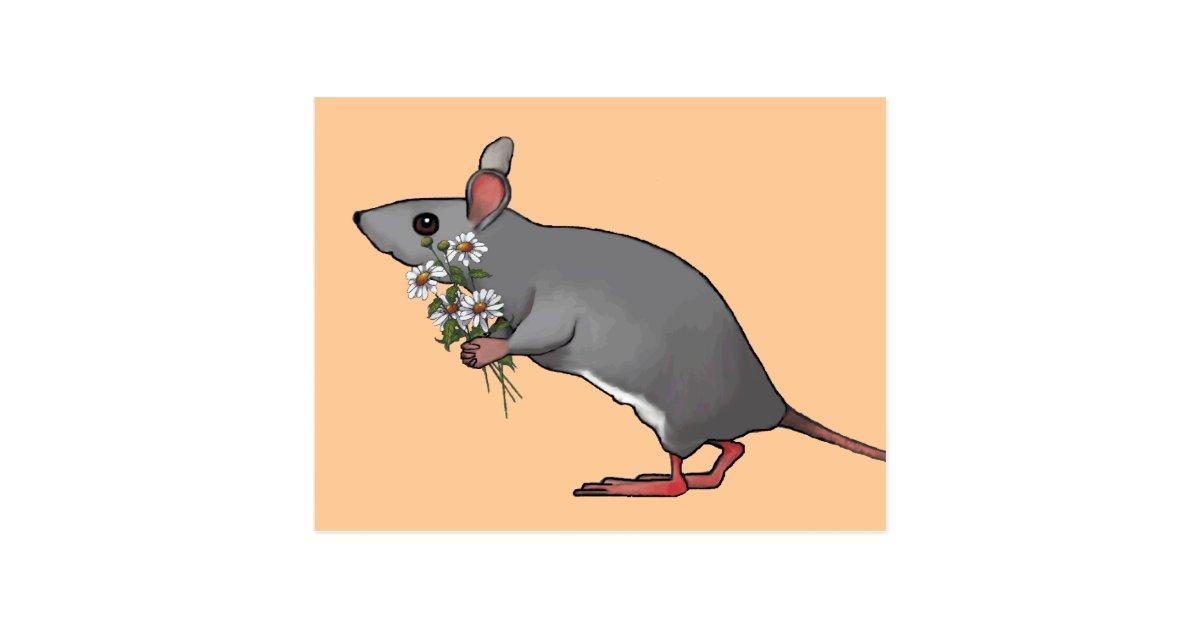 Maus, die Blumen, Gänseblümchen holt: Kunst Postkarte | Zazzle.ch