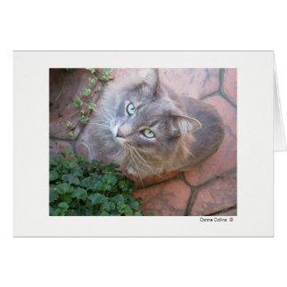Maximal die Katze   #-3 Mitteilungskarte