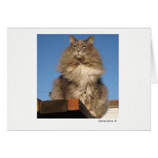 Maximal die Katze   #-4 Mitteilungskarte