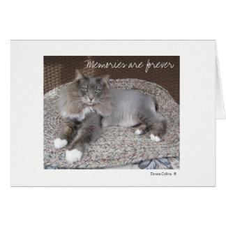 Maximal die Katzen-Anmerkungskarte Mitteilungskarte