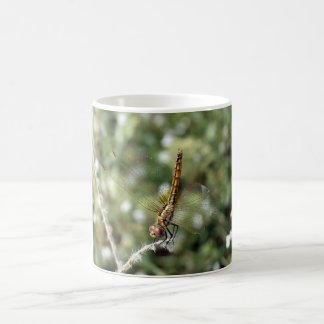 Mayfly, der auf einem Zweig stillsteht Kaffeetasse