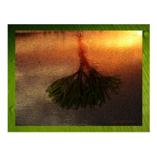Meerespflanze Postkarte