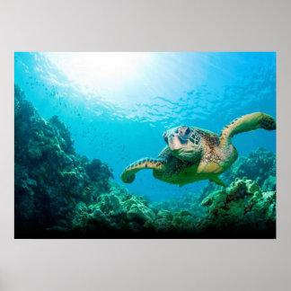 Meeresschildkröte-Plakat Poster