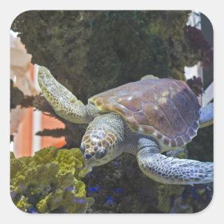 Meeresschildkröte Quadratischer Aufkleber