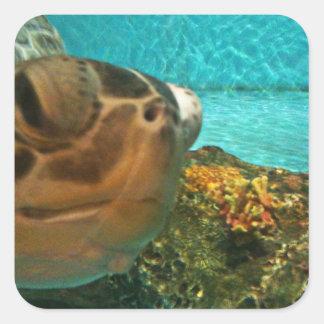 Meeresschildkröte-Überraschung Quadratischer Aufkleber