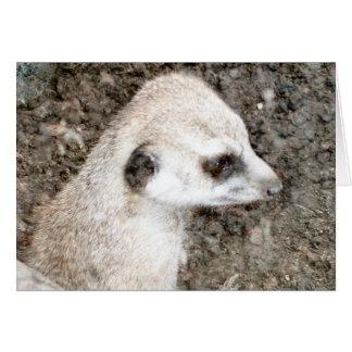 Meerkat #4 karte