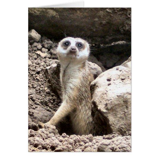 Meerkat #7 grußkarte