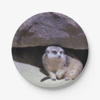 Meerkat Foto Pappteller