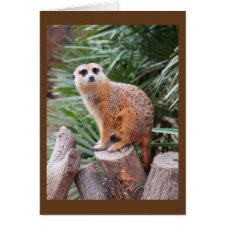 Meerkat Grußkarte