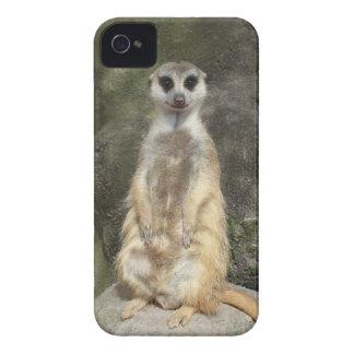 Meerkat iPhone 4 Case-Mate Hülle
